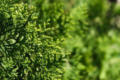 Зеленая предпосылка лист стоковая фотография rf