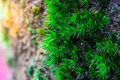Зеленая предпосылка мха, дерево с зеленым мхом вебсайт обоев пользы tan 2 теней представления приглашения иллюстрации настольного Стоковое Фото