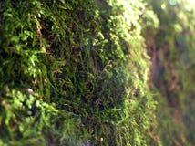 Зеленая предпосылка мха леса в defocus стоковое фото rf