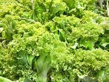 Зеленая предпосылка овощей Стоковые Изображения RF