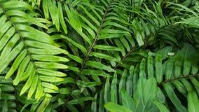 Зеленая предпосылка папоротников любит в тропическом лесе стоковая фотография rf