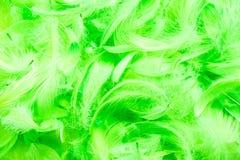 Зеленая предпосылка рамки пер птицы полная Стоковые Изображения