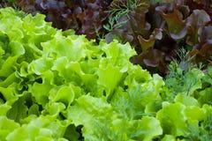 Зеленая предпосылка с пустым космосом экземпляра для здорового питания : стоковые изображения rf