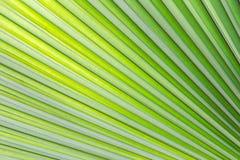 Зеленая предпосылка текстуры лист для шаблона вебсайта, красоты весны, окружающей среды и дизайна концепции экологичности Стоковая Фотография RF