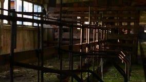Зеленая прессформа на стенах страшное место старая амбара нутряная съемка steadicam акции видеоматериалы