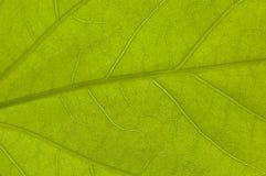 зеленая природа листьев Стоковое Фото