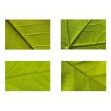 зеленая природа листьев Стоковые Фото
