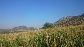 Зеленая природа Турции на ясный солнечный день стоковое изображение