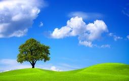 зеленая природа стоковые изображения rf