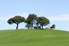 зеленая природа Стоковые Фотографии RF