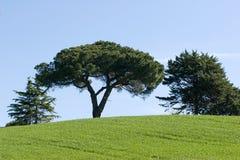 зеленая природа Стоковые Фото