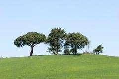 зеленая природа Стоковые Изображения