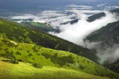 зеленая природа Стоковое Изображение
