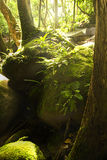 Зеленая пуща Стоковое фото RF