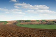 Зеленая пшеница и вспаханный ландшафт обрабатываемой земли поля Стоковые Изображения
