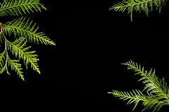 Зеленая рамка ветвей дерева туи на черной предпосылке Вечнозеленая текстура, космос экземпляра стоковые изображения rf