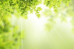 Зеленая рамка листьев. Стоковое фото RF