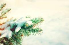 Зеленая рождественская елка на предпосылке снега в передних частях зимы Стоковая Фотография