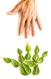 зеленая рука Стоковая Фотография RF