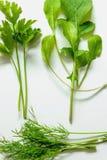 Зеленая свежесть - листья здоровых трав Стоковое Изображение