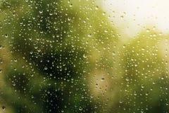 Зеленая свежесть после дождя стоковое фото