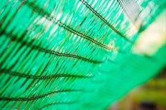 Зеленая сеть shading защищает свет солнца Стоковое фото RF