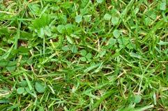Зеленая сочная и старая сухая трава Стоковая Фотография