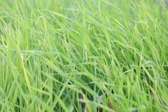 Зеленая сочная текстура травы Стоковые Фото