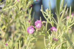 Зеленая сочная трава и gentle фиолетовые цветки в поле на su Стоковые Фотографии RF