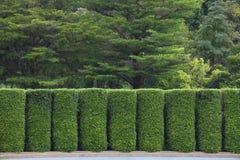 Зеленая стена фигурной стрижки кустов для отделяя и разделяя на зоны сада к различной цели комнаты и общего назначения стоковые фотографии rf