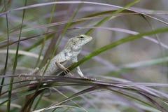 Зеленая стойка хамелеона держа дальше лист в джунглях, малое насекомое дерева звероловства дракона ящерицы для еды, животных пред Стоковое Изображение RF
