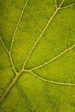 зеленая структура листьев Стоковые Изображения RF