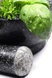 зеленая ступка трав Стоковое Изображение