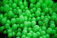зеленая текстура листьев Стоковая Фотография