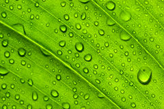 зеленая текстура листьев стоковые фото