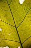 зеленая текстура листьев Стоковое фото RF