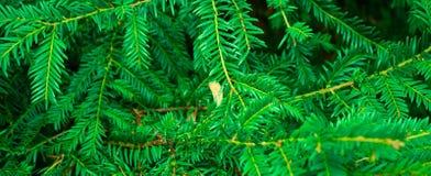 Зеленая текстура лист Предпосылка текстуры лист Красивая картина для знамени с зеленым растением Концепция природы бесплатная иллюстрация