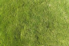 зеленая текстура лужайки Стоковые Изображения