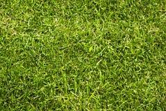 зеленая текстура лужайки Стоковая Фотография