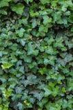 Зеленая текстура стены лист в ориентации портрета стоковые фотографии rf