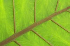 зеленая текстура Стоковое Фото