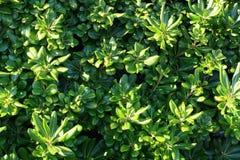 зеленая текстура Стоковые Изображения