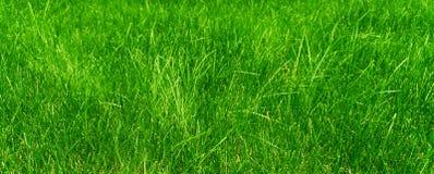 Зеленая трава в луге на солнечный день стоковое фото