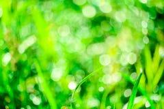 зеленая трава в саде и нерезкости падения воды на листьях стоковая фотография rf