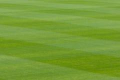 Зеленая трава в стадионе или поле спортов Стоковая Фотография RF