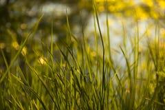 Зеленая трава в ярком солнце стоковые фотографии rf