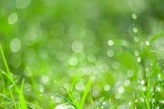зеленая трава в blokeh сада падения воды на листьях в поле стоковое фото rf