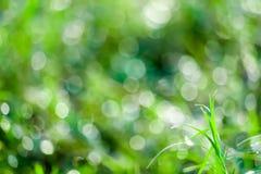 зеленая трава в blokeh сада падения воды на листьях в поле стоковое фото