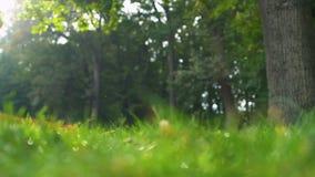 Зеленая трава и деревья в красивом лесе, нетронутой природе, предохранении от экологичности акции видеоматериалы