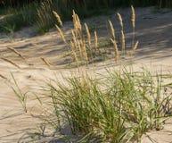 Заводы зеленой травы на желтых песках крупных планов пляжа Зеленая трава и желтый песок стоковая фотография